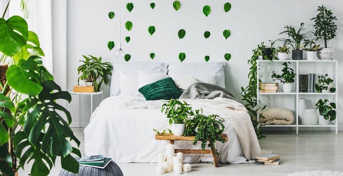 Jakie Kwiaty Do Sypialni Zdrowe Kwiaty Doniczkowe Do Sypialni Expert Budowlany Pl